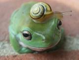 Froggy ico