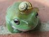 Large froggy ico