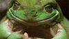 Large froggman tg