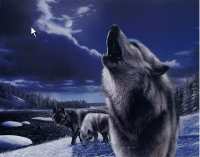 Wolf wolves howl