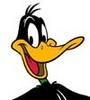 Large daffy hd