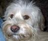 Charlie web avatar