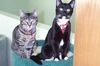 Large kittens and goldi 220 004