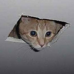 Ceiling cat sq