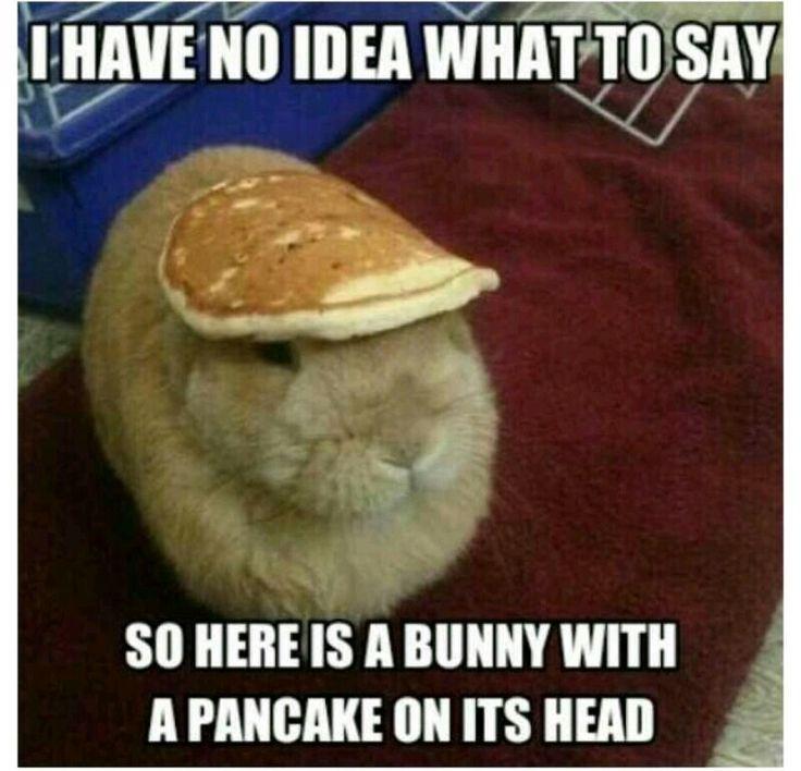 Bunnypancakehead