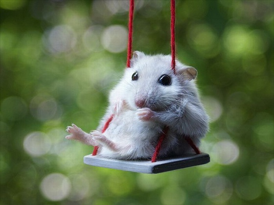 Fmc slide cute rodent on a swing