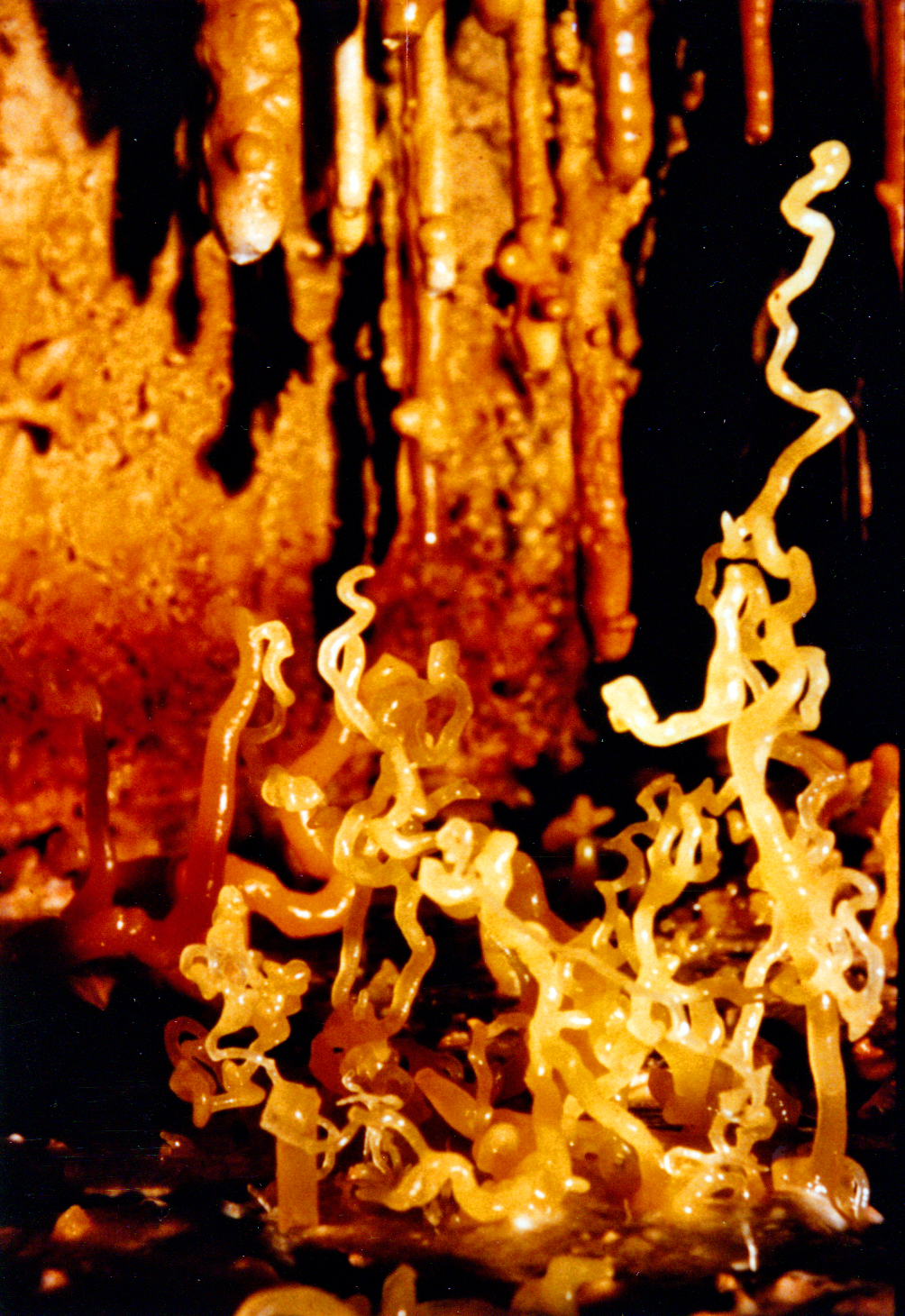 Snake dancers cottonwood cave