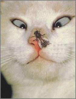 Cat 20nose