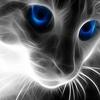 Large desktopcat