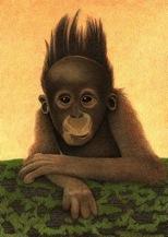 Hair raising chimp
