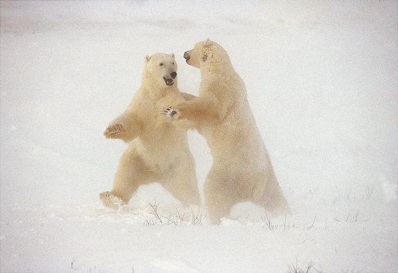 Gal nature bears