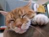 Large cat29