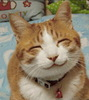 Large smiling cat