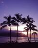 Large hawaii sunset