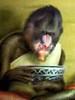 Large baboon01