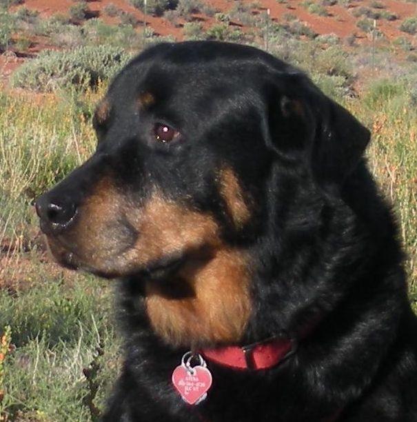 Dog icon a1