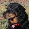 Large dog icon a1