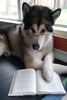 Large literate puppy