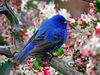 Large blue bird of happiness