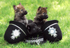 Large german shepherd puppies 954474809