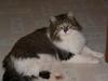 Large straycat 1