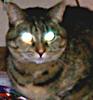 Large warkitty avatar