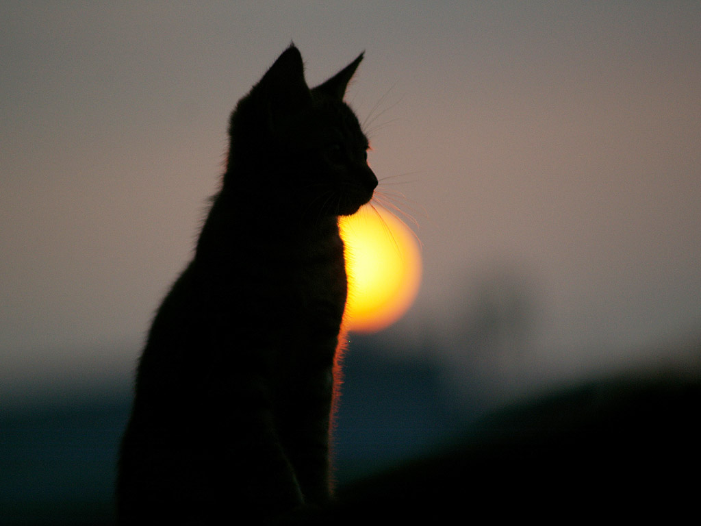 Kitty at sunset