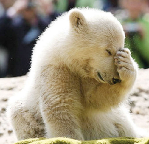 Facepalm bear 2
