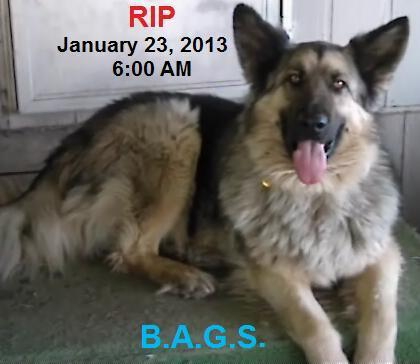 1 bags 2 rest in peace  12  1 23 2013  5 am