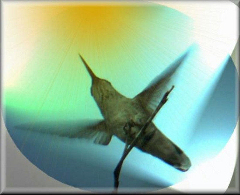 Hummingbird in flight icon
