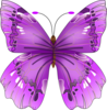Large purple butterfly.jpg