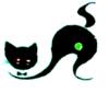 Large blk cat