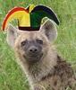 Large hyena pup5