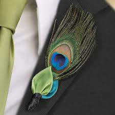 Peacock bout