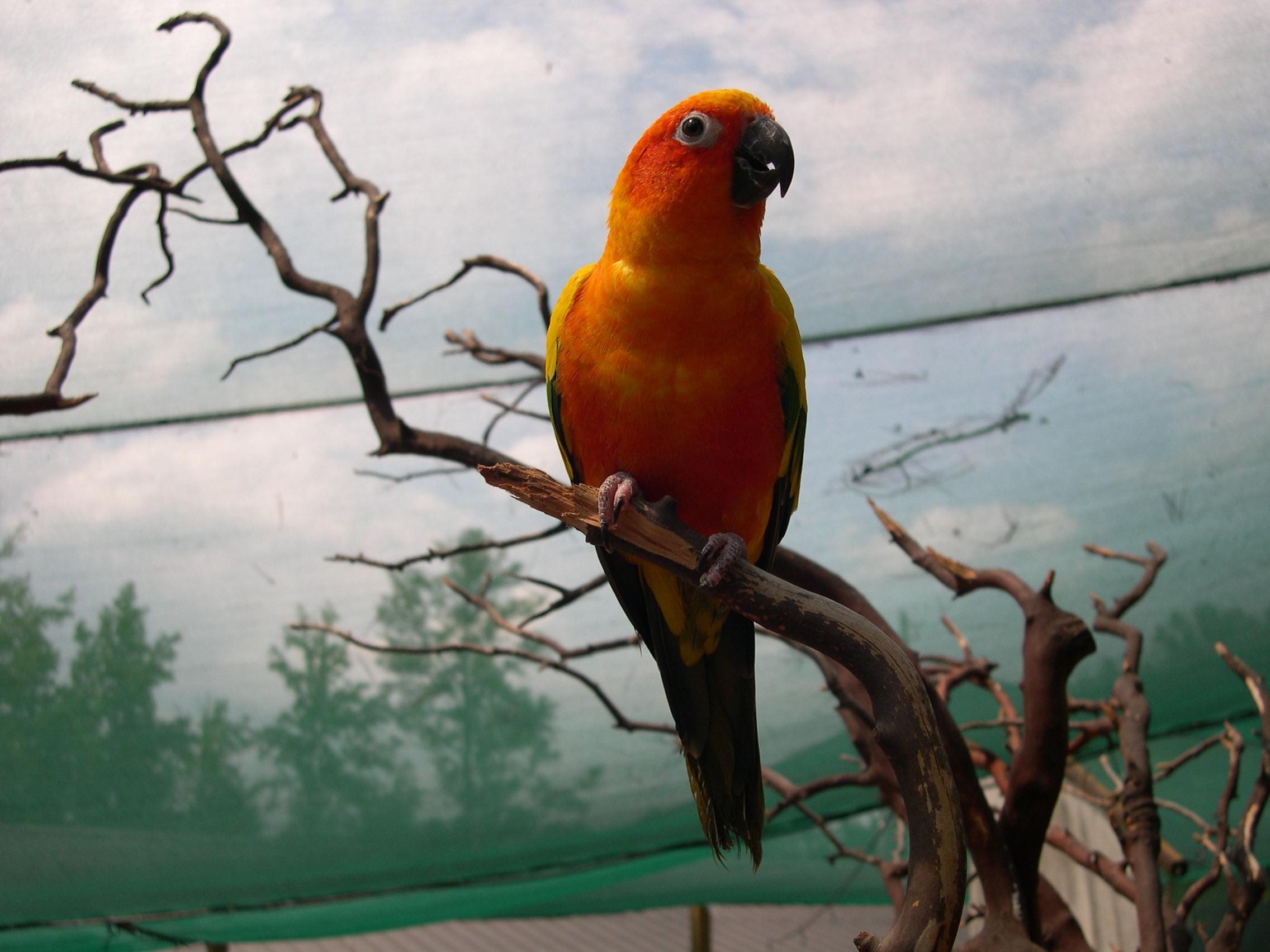 Orange bird 2