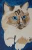 Large portrait in blue  2