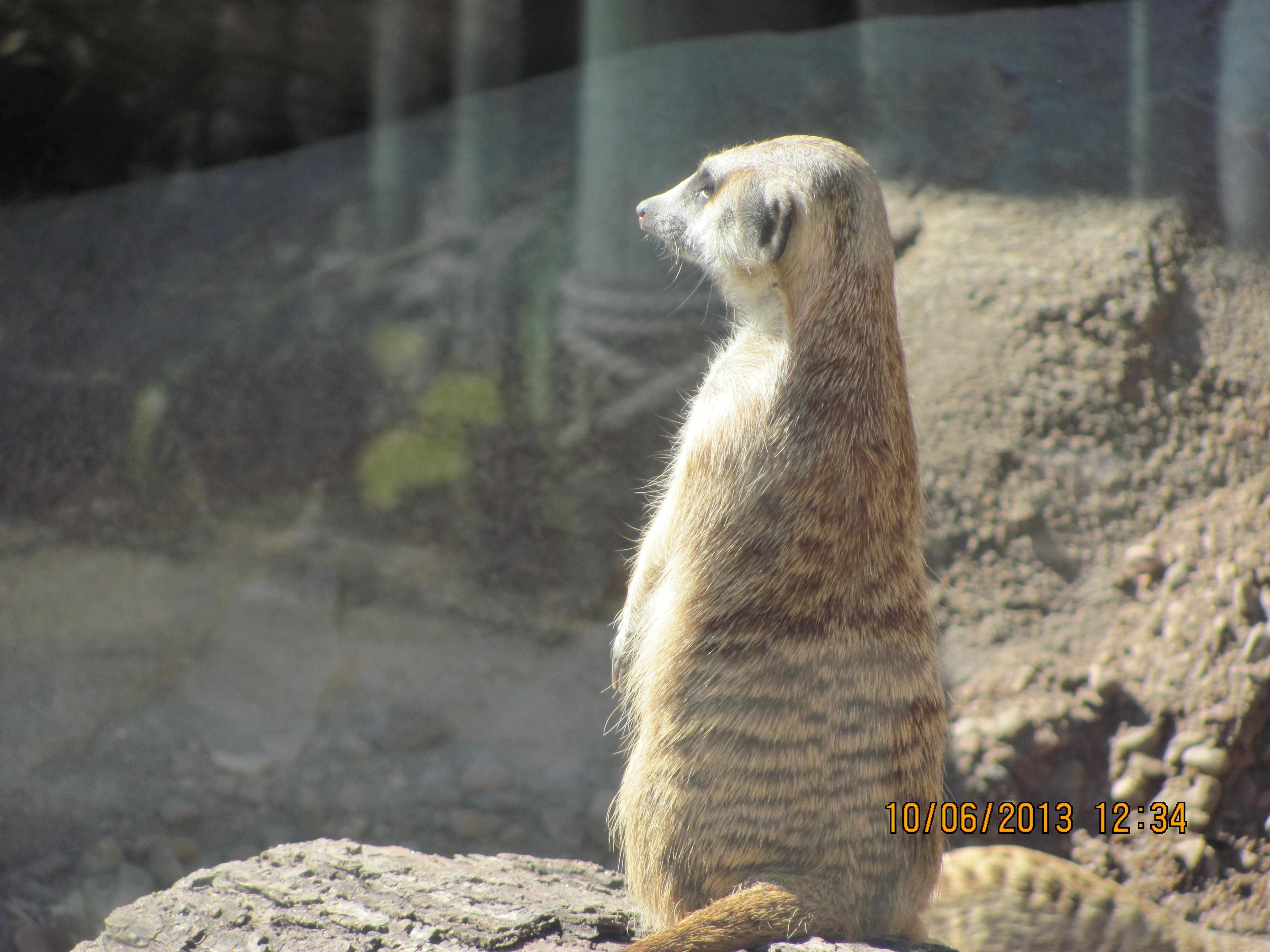 Sg county zoo 077