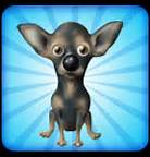 Th  chihuahua avatar