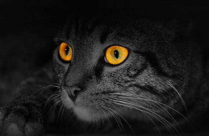 Cat eye22