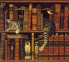 Large cat sleeping on bookshelf