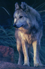 Large mexicanwolf robinsilver 200y