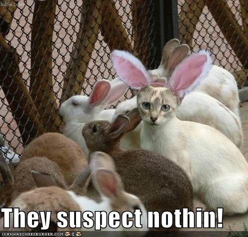 Funny pictures cat disguised rabbit